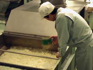 Sprinkling koji-kin onto a conveyor